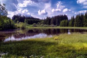 Schwarzer Teich bei Langenbach