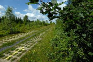 Kolonnenweg. Bildrechte: Frankenwald-Tourismus & E. Martino