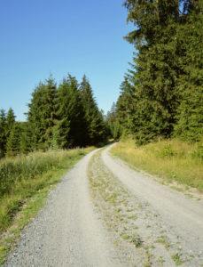 Befestigter Waldweg im Fichtelgebirge