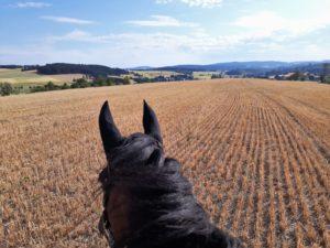 Reiten; Pferd; Ausritt; Wandern; Natur; Rückkehr; Heimat; Frankenwald; Doebraberg; Döbraberg; Sommer; Landkreis Hof; Hofer Land; Oberfranken; Hochfranken; Panorama; Weitblick
