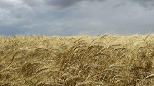 Getreide; Saat; BRauchtum; Oberfranken; Hofer Land