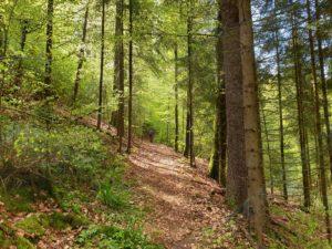 Der Kohlstatt-Weg DÖ 98 bei Geroldgsrün führt rund um den Hahnenkamm.