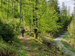 Die weichen Waldwege des DÖ 98 verlaufen auf parallel zur befestigten Schotterstraße.