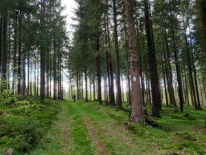 Der Wanderweg DÖ 98 ist sehr gut ausgeschildert. Typisch Frankenwald.