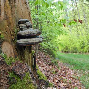 Zeit für die Natur entlang des Wegs im Frankenwald.
