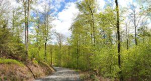 Frühling im Frankenwald: Die erste Wanderung der Saison wird uns auf den Kohlstatt-Weg bei Lotharheil führen.