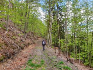 Rund um den Hahnenkamm: Der Kohlstattweg DÖ 98 verläuft meist an der Bergflanke entlang.