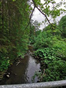 Die Lamitz unterhalb des großen Floßteiches, in dem sich einige riesige Karpfen sonnten.