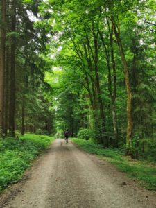 Der Weg durch den Gerlaser Forst, wir fühlen uns umhüllt von frischem Grün.