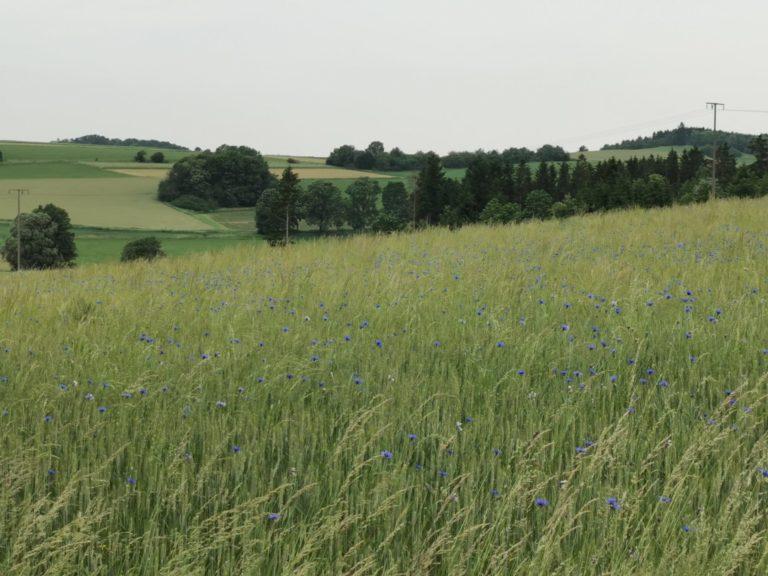 Kurz vor Bobengrün halten wir schon wieder, um den Blick über Felder und Wälder schweifen zu lassen.
